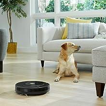 R612_R614_R627_R675_R671_R670_Photo_Lifestyle_Dog in Living Room_EMEA_NA_Japan_APAC