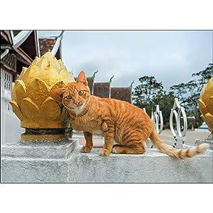 2021カレンダー 世界の旅猫