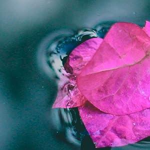 aroma di acqua di rose