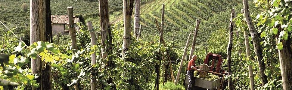 Mionetto Prosecco Vineyard