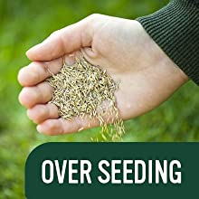 EverGreen Multi Purpose Lawn Seed is Ideal for Over-Seeding