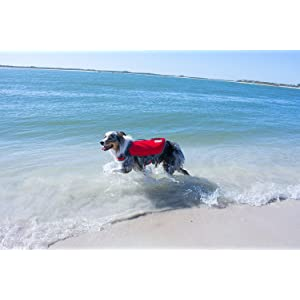 dog life jacket, life jackets for dogs, sport gear for dogs