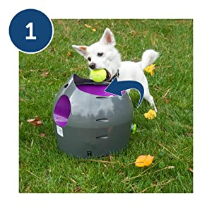 automatic ball launcher, ball thrower, tennis balls for dogs, dogs that chase tennis balls, fetch