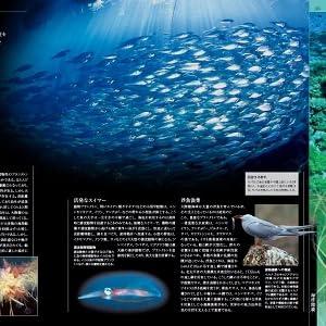 海洋大図鑑2