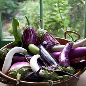 Introduction to Mastering the Art of Vegetable Gardening