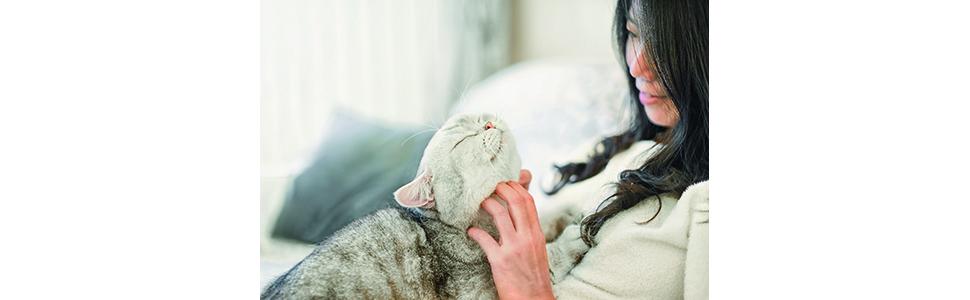 Cat, Pets,