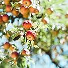 りんご オーガニック アップルソース  ピューレ 離乳食 介護職 保存食 備蓄
