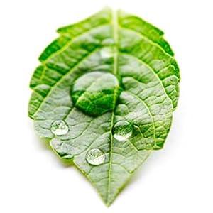 natural organic moisturizing