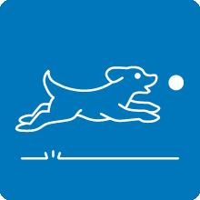 light up dog ball, automatic dog ball launcher, dog ball indestructible, glow in the dark dog ball,