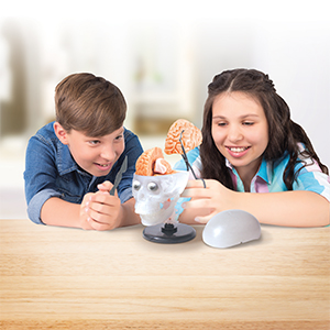 This Amazing Squishy Brain Toy Will Make Your Kid Love Science