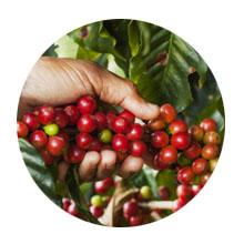 cápsulas de café compatibles con Nespresso