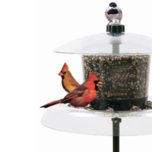 droll yankees, chickadee, bird feeder, dome feeder, heath, cardinal, birdfeeder, bluejay feeders
