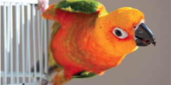The Conure Handbook, Anne Watkins, health issues, Conures, parrots