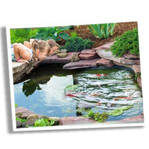 pond clear pond cleaner pond clarifier pond bacteria fish pond pond barley bales pond foam