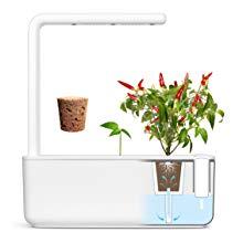 Emsa 3 Cápsulas de fresas silvestres Click & Grow, Semillas apta ...