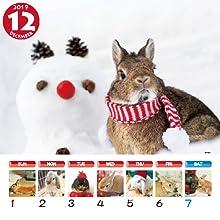 うさぎと暮らす うさぎと暮らすカレンダー うさぎと暮らす壁掛けカレンダー ペットカレンダー かわいい動物カレンダー