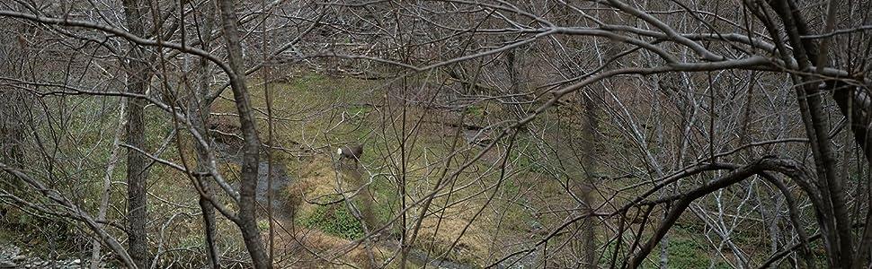 狩り 狩猟 の ススメ 勧め 石川 竜一