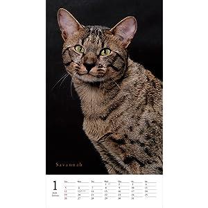 カレンダー2020 美しき猫