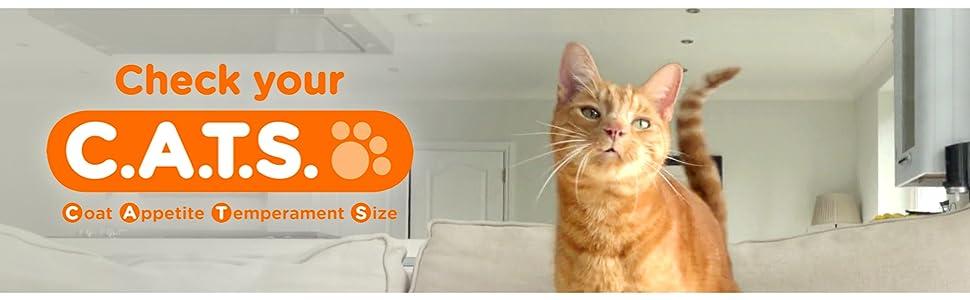 Check Your Cats, Coat, Appetite, Temperament, Size, Orange Cat, Adventure, Playful