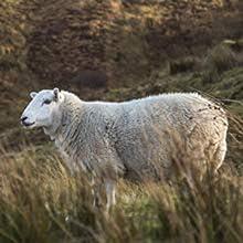Pantuflas de lana virgen de oveja, lana de fieltro, cálidas