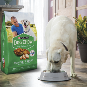 Adult dog eating a bowl of Purina Dog Chow Complete Adult With Real Chicken dry dog food