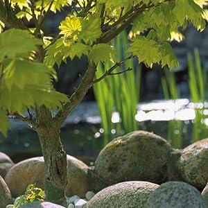 Oase 50758 - Estanque prefabricado: Amazon.es: Jardín