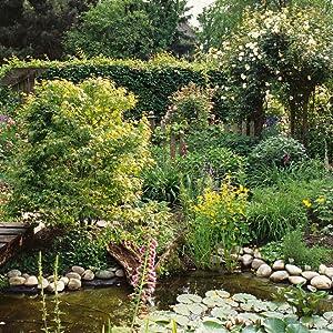 Garten; Wasser