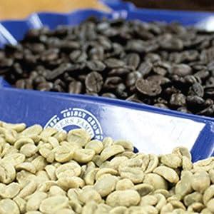 analyze, green coffee, roasting, whole bean, san francisco bay coffee