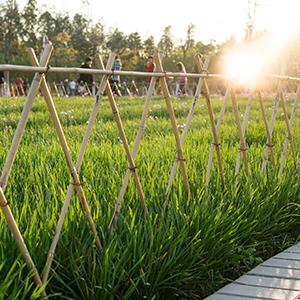 Relaxdays, Color Varas, Tutores para Plantas, Bambú Natural, 150 cm: Amazon.es: Jardín