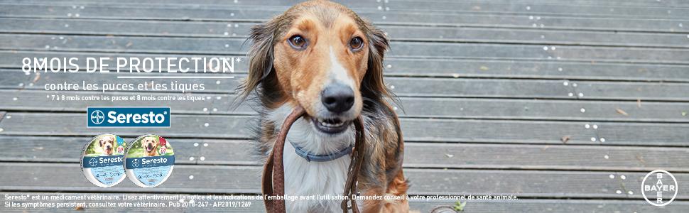 Seresto collier anti puces, tiques et poux qui protège votre chien jusqu'à 8 mois