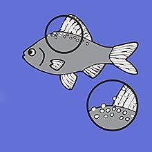 Ich white spot fish diseasse