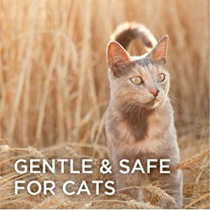 Burts Bees, Cats, Kittens, Grooming, Tools, Combs, Brushes, Flea, Organic, Natural