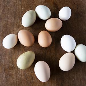 たまご,卵