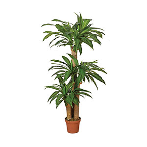 Planta Artificial Drácena 145 cm