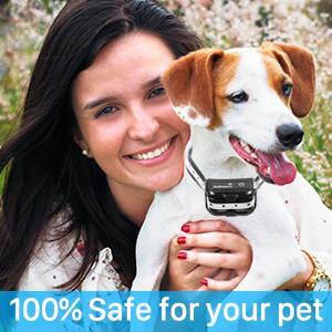 small dog shock collar