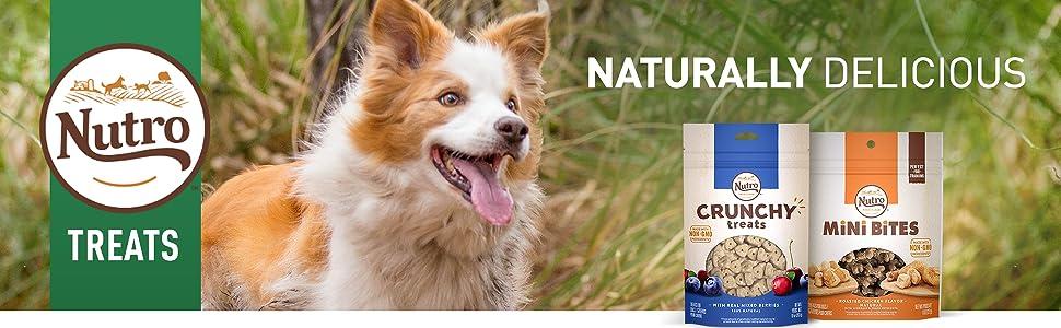 Nutro Dog Treats, Dog Treats for Small Dogs, Dog Treats for Large Dogs, Small Breed Dog Treats
