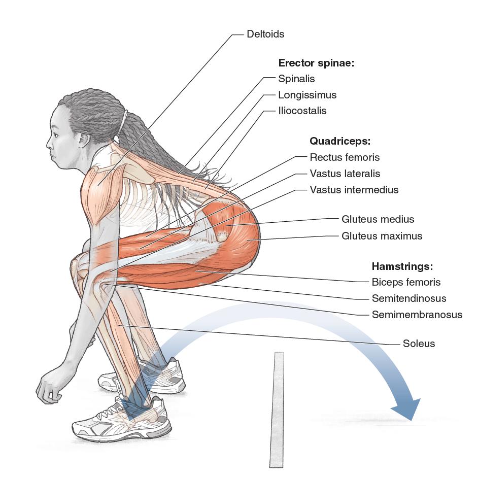 Plyometric Anatomy: Derek Hansen, Steve Kennelly: 9781492533498 ...
