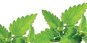 teatree mint leaves