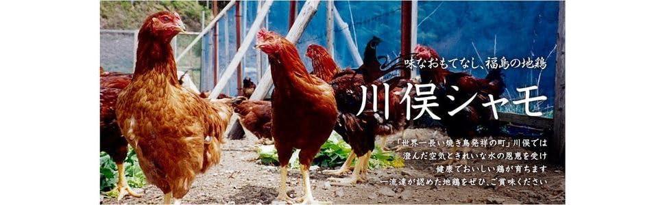 福島県 地鶏 川俣しゃも