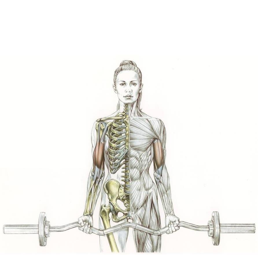 Delaviers Womens Strength Training Anatomy Workouts Frederic