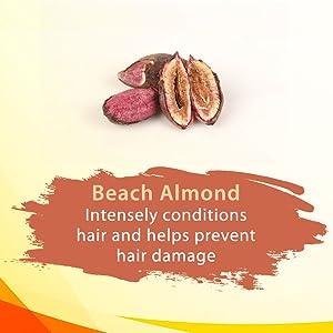 Beach Almond