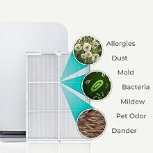 Alen 75i True HEPA Silver Allergies Dust mold bacteria mildew pet odor dander