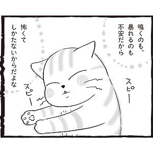 はじめての保護猫