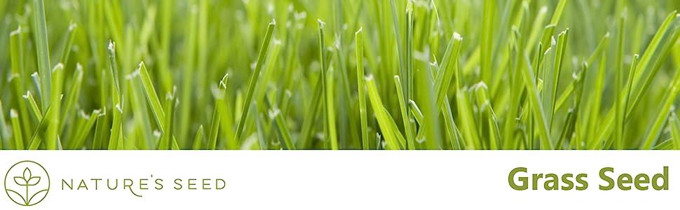 grass seed header