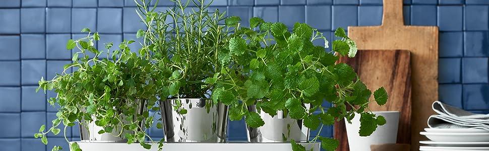 Wmf Gourmet Krautergarten Set Krautertopf 3 Teilig Mit Bewasserungssystem Edelstahl Cromargan Kunststoff Fur Frische Krauter Wie Basilikum