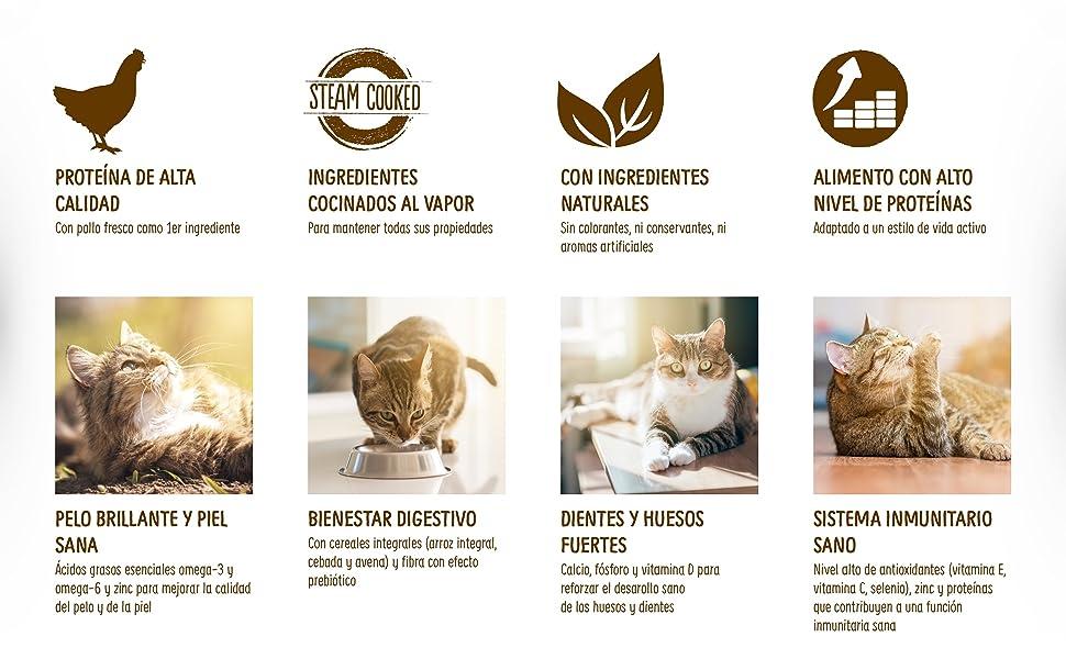 True Instinct Original - Pollo Comida Para Gatos - 1.25 kg: Amazon ...
