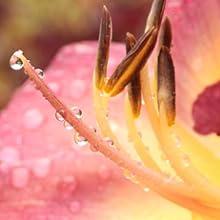 Dewwy Flower