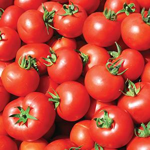 tomatoes, fresh