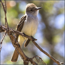 Outstanding Birding Binocular