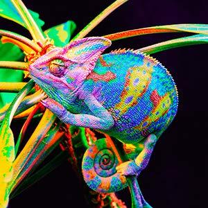 High Contrast & Vibrant Color
